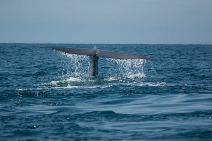 Blue Whales return to San Diego!