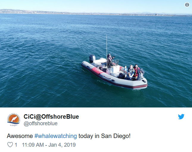 Whale Watching January 3rd 2018