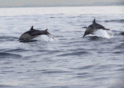 dolphin-tag