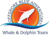 Offshore Blue Adventures, Captain Cici Sayer, Whale watching | Offshore Blue Adventures