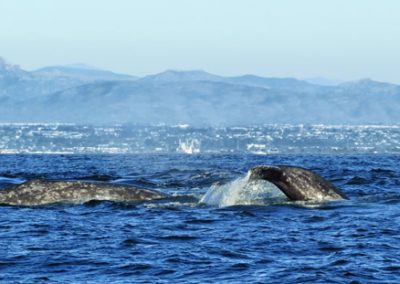 two-whales